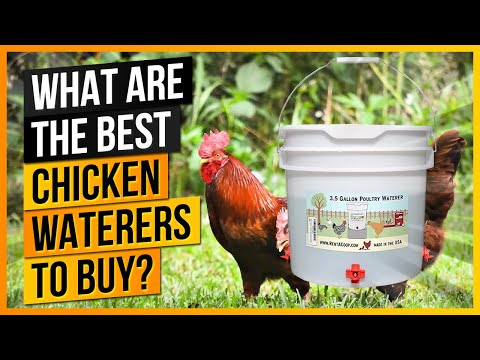 What Are the Best Chicken Waterers To Buy?