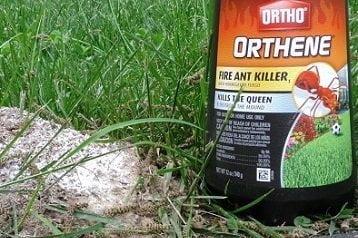 Ant Killer Reviews
