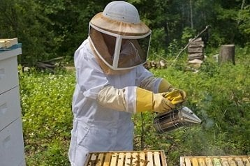 Bee Suit Reviews