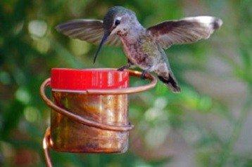 Hummingbird Feeder Reviews