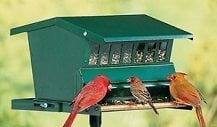 Things to Consider When Buying Squirrel Proof Bird Feeder