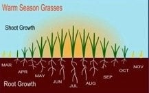 Warm-Season Grass