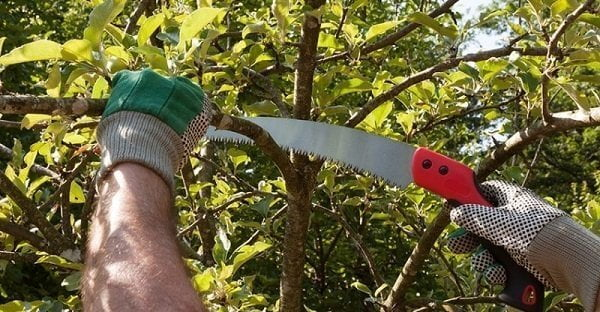 How to Buy a Pruning Saw