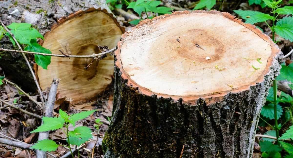 The Ultimate Tree Stump Killer Guide